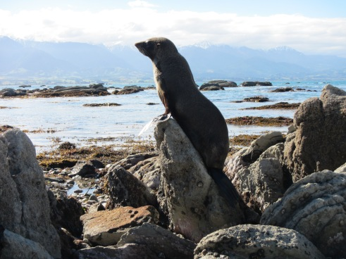 Stylish Seal