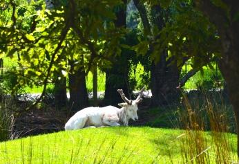 Yogi Deer