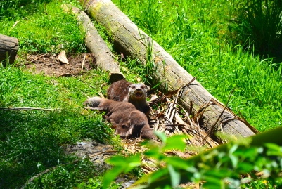 Otters of Awesomeness