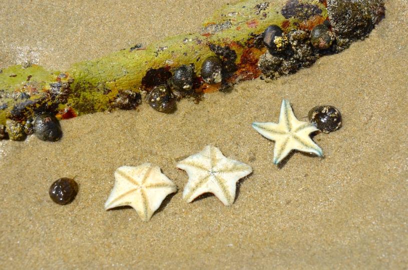 Stars & Snails