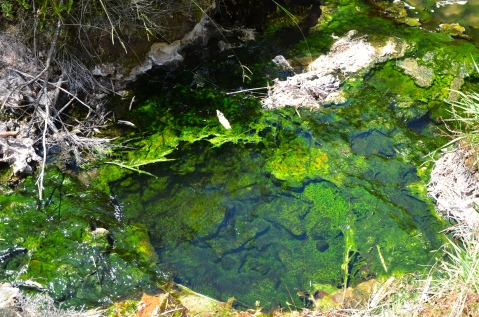 Emerald Depths