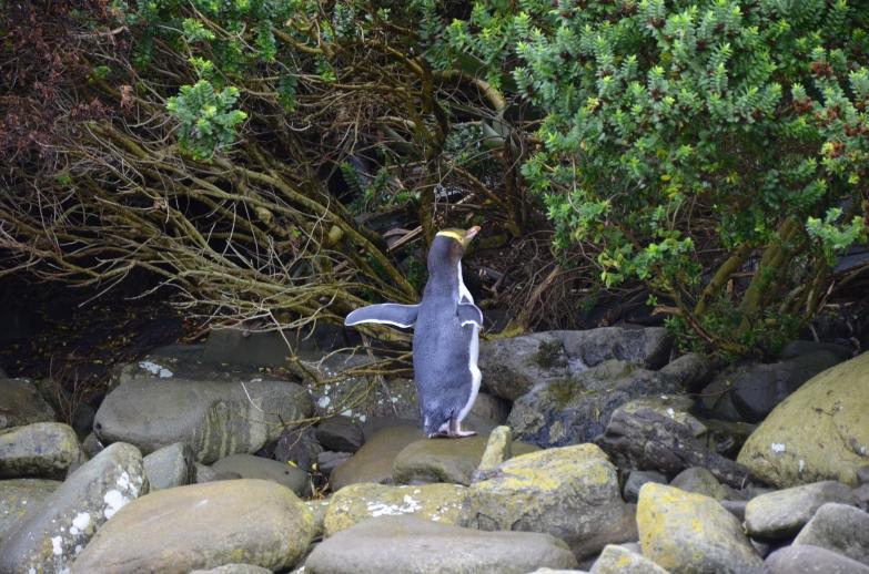 Penguin Loves Paparazzi