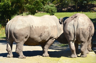 Guess What? Rhino Butt.