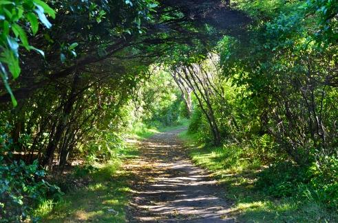 Walkway to Whariwharangi Hut