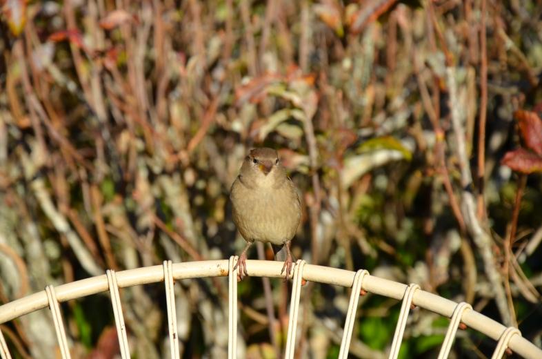 Birdman Stuntin'