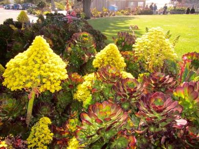 The super succulents