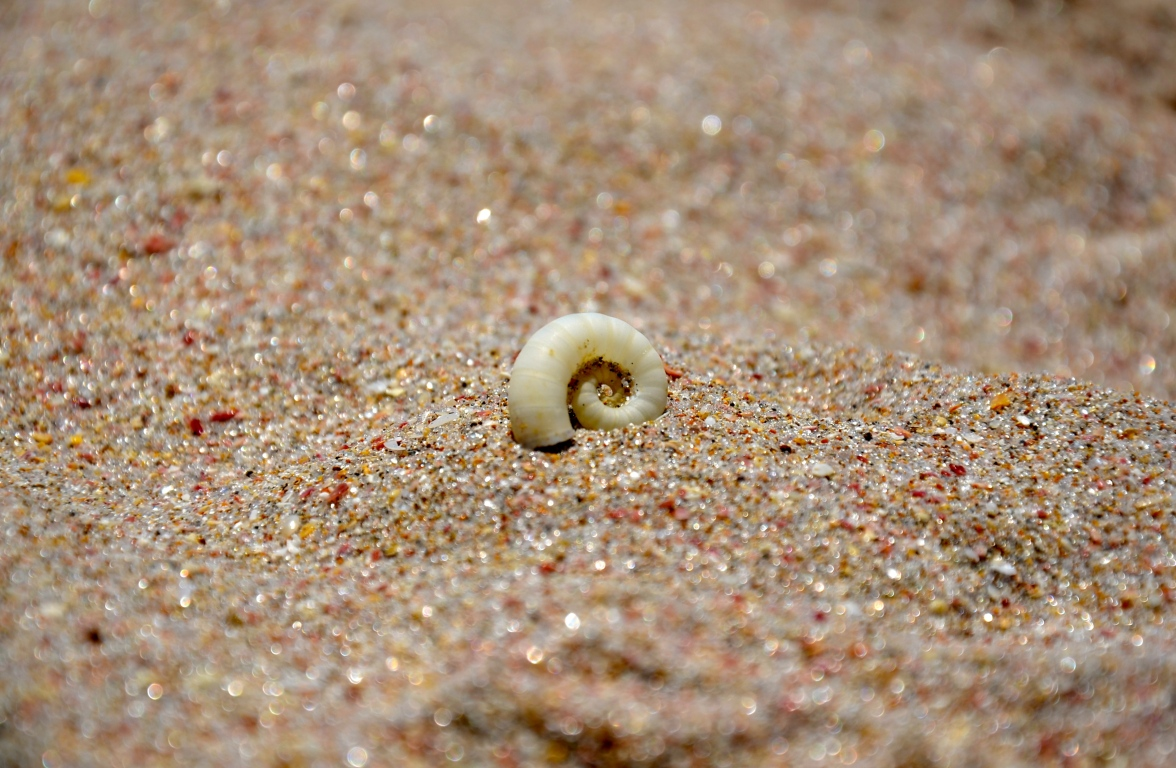 Progression of a Seashell