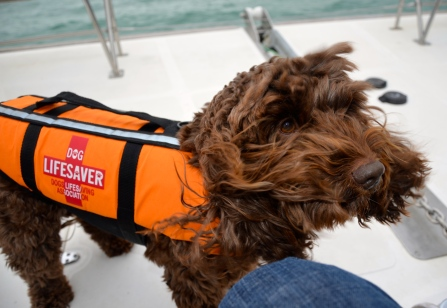 Furry Lifesaver